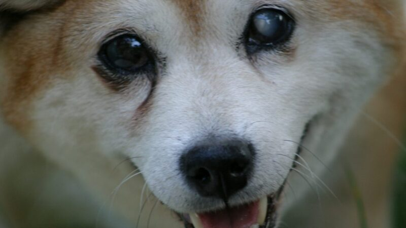 Is Shiba Inu (SHIB) on track to make it in the top 10 coins following a 300% rise?